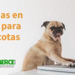 Tiendas en línea para tu mascota